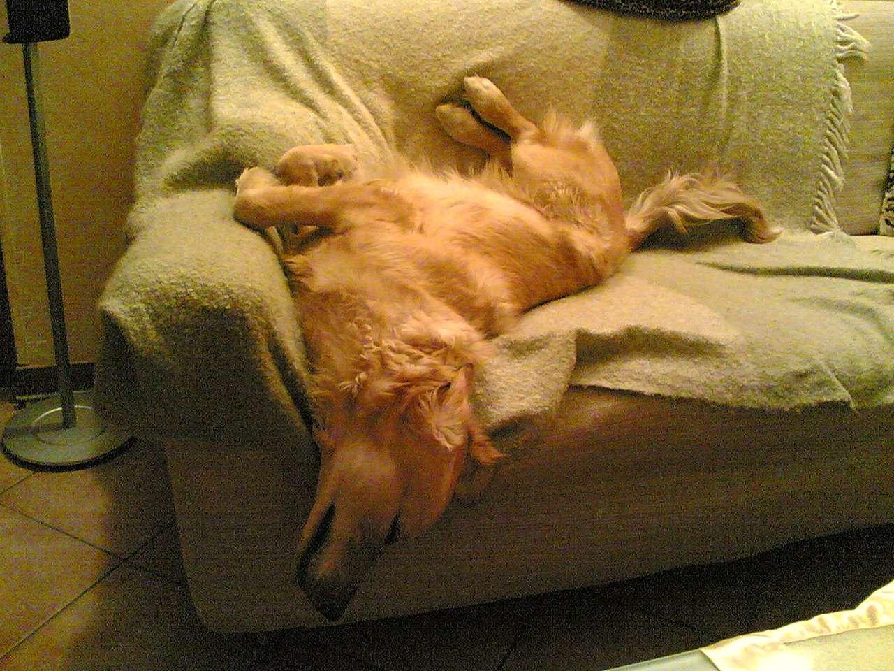 Dove dormono i vostri cuccioli - Pipi sul divano ...